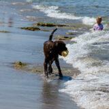 ll mare, il cane ed il bambino